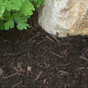 Medium Mulch