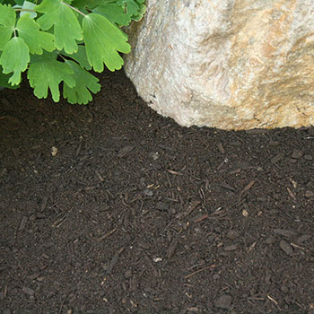 Specialty Top Soil / Compost Mixture